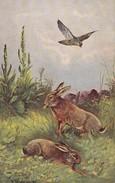 Hunting Chasse  Lampin Rabbit  Häse Hawk Sperwer Eagle  A.Müller  Old  Postcard. 1922 - Hunting