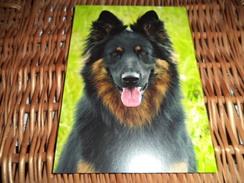 Hund Dog Chien Bohemian Shepherd,Chodsky Pes , Chodenhund  Postcard Postkarte - Chiens