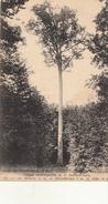 Chêne Du Fond Du Sac - Forêt De NEUVILLE(Oise)  -Arbre Classé Remarquable Le 21 Octobre 1912 - Árboles
