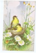 CATHERINE KLEIN - BIRDS - EDIT STEHLI FRERES - LARGE FORMAT - RARE - 1922 A - Old Paper