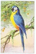 CATHERINE KLEIN - PARROT - EDIT STEHLI FRERES - LARGE FORMAT - RARE - 1923 - Old Paper