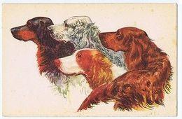 SETTER DOG - 1930s POSTCARD ( 316 ) - Illustrateurs & Photographes