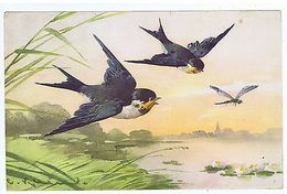 CATHERINE KLEIN - BIRDS - EDIT STEHLI FRERES - LARGE FORMAT - RARE - 1922 - Old Paper