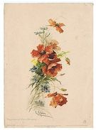 CATHERINE KLEIN - POPPIES & CORN-FLOWERS - EDIT R. TUCK & SON - LARGE FORMAT - Old Paper