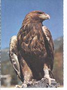 Steinadler  - **3949-62** - Vögel
