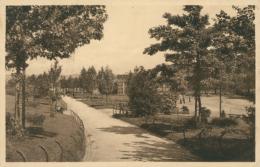 BE FOREST  / Promenade Dans Le Parc / - Belgium