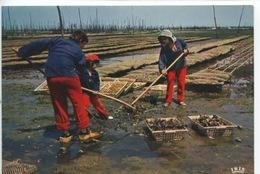Baie D'Arcachon : Scène Ostréicole Dans Un Parc à Huitre  (n°548 Vierge) Ostréiculture - Pêche