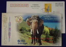 China 2000 Fuqing Telecom New Year Greeting Pre-stamped Card Rare Asiatic Elephant - Elephants