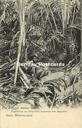 German New Guinea, Kaiser-Wilhelmsland, Beliao Papua Chopping Sago Palm (1904) - Papua-Neuguinea