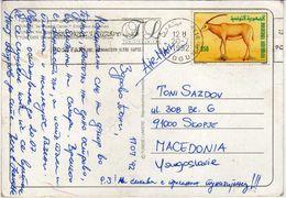Tunisia.( Camel )  Via Macedonia.nice Stamp - Animals/Mammals/Antelopes - Tunisie