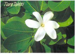 Polynésie Française-TIARE (b) TAHITI La Fleur De Tiare Reste Le Symbôle Le L'acceuil Tahitien: LA ORANA Parfumerie TIKI - Polynésie Française