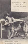 Clinica Canina - Pubbl.per Vet.spcializato     (A-50-150204) - Chiens