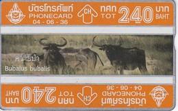 TARJETA DE TAILANDIA DE UNOS BUFALOS DE 240 UNITS (NUEVA-MINT) BUFALO (324G) - Tailandia