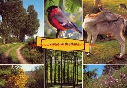 Groeten Uit Molenheide - Helchteren - Houthalen-Helchteren
