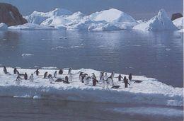 TAAF / Terres Australes Et Antarctiques Françaises : Not Travelled Postal Stationery: ANTARCTICA,ICEBERG,PINGUIN,PENGUIN - Enteros Postales