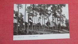 - Florida >   Mt  Dora > > Ref 2628 - United States