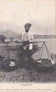 Vruchtenventer/ Réf:C5253 - Indonésie