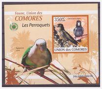 0287 Comores 2009 Papegaai Parrot Perroquet S/S MNH Imperf - Parrots