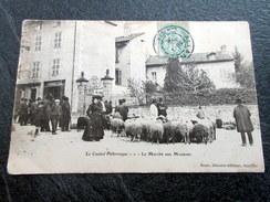 CPA Animée - Le Cantal Pittoresque - Le Marché Aux Moutons - Magasin Torresse - 1905 - France