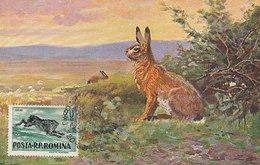 D30688 CARTE MAXIMUM CARD RR 1956 ROMANIA - HARE HAAS HASE CP VINTAGE ORIGINAL - Gibier