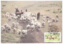 Berger Avec Troupeau De Moutons,âne Et Chèvre - Non Classés