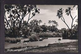 CPSM ETHIOPIE - AWASH - TB PLAN D'un Petit Lac ?? Avec Oiseaux - Landscape - Etiopía