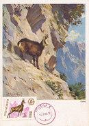 D30743 CARTE MAXIMUM CARD 1966 ROMANIA - RUPICAPRA CHAMOIS ISARD GEMS CP ORIGINAL - Gibier