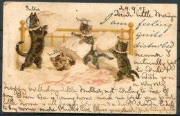 1902 Tuck 'Write Away' Cats Postcard 216 - Cats