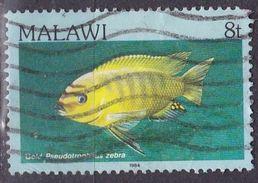 Malawi, 1986 - 8t Gold Pseudotropheus Zebra - Nr.431 Usato° - Malawi (1964-...)