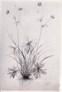 AK Zeichnung Einer Blume (29595) - Blumen