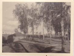 Foto Bobruisk - Bäume Häuser - 1942 - 9*6cm (29609) - Orte