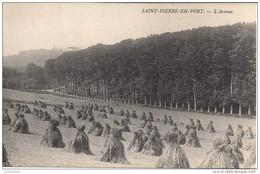 CPA Saint Pierre En Port L'Avenue - Fécamp