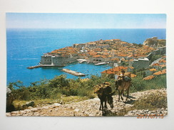 Postcard Dubrovnik Croatia & Donkeys My Ref  B11498 - Croatia
