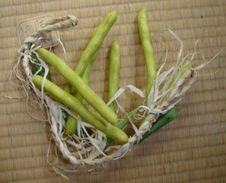 Artificial Hanging Beans - Other