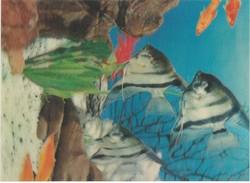 CARTOLINA - POSTCARD - ANGEL FISH  IN 3D - Pesci E Crostacei