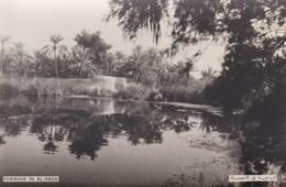 SAUDI ARABIA--RARE---Farmig In Al-hasa---munistry Of Information--carte Photo--voir 2 Scans - Arabie Saoudite