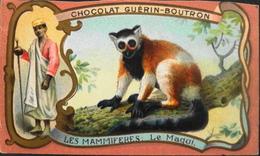 Chromo & Image - Chromo. Tour Doré - Chocolat Guérin-Boutron - Les Mammifères - Le Maqui - En BE - Guerin Boutron