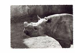 Cpm - RHINOCEROS - - Publicité GENOLINE 29 - 1957 - Rhinocéros