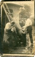 CP PHOTOS  Decoupe Du Cochon - Artisanat