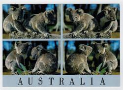 MAXICARD    AUSTRALIA'S  KOALA   2  SCAN   (VIAGGIATA) - Australia
