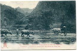 INDOCHINE CARTE POSTALE NEUVE - Cartes Postales