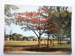 Postcard Lagos Nigeria Flame Tree Yaba College Of Technology Campus  My Ref B21517 - Nigeria