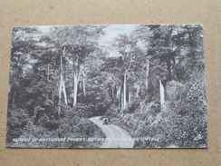 Glimpse Of Amatongas Forest Between BEIRA And UMTALI ( Tuck / Sepia ) Anno 19?? ( Details Zie Foto´s ) !! - Zimbabwe