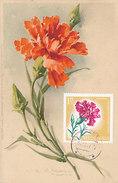 D30810 CARTE MAXIMUM CARD RR 1967 ALBANIA - DIANTHUS CP VINTAGE ORIGINAL - Pflanzen Und Botanik