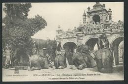 Annam Hué -   éléphants S'agenouillant, Faisant Les Lais En Passant Devant Le Palais Du Comat   - Odh22 - Vietnam