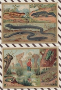 7AJ220 CHROMO HISTOIRE NATURELLE Lot De 2 LES AMPHIBIENS - Histoire