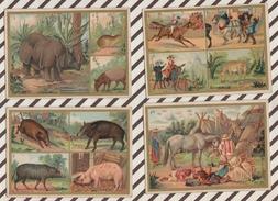 7AJ225 CHROMO HISTOIRE NATURELLE Lot De 7 LES PACHYDERMES - Histoire