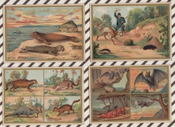 7AJ228 CHROMO HISTOIRE NATURELLE  LES CARNASSIERS Lot De 14 - Histoire