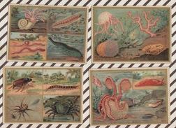 7AJ231 CHROMO HISTOIRE NATURELLE  ZOOLOGIE Lot De 6 - Histoire