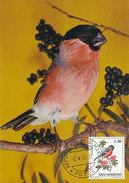 D30859 CARTE MAXIMUM CARD 1973 SAN MARINO - BULLFINCH BOUVREUIL CP ORIGINAL - Zangvogels